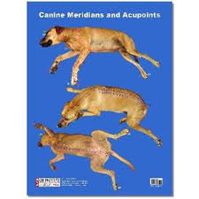 Canine Acupuncture Meridian Chart Canine Acupuncture Meridians Poster Po03