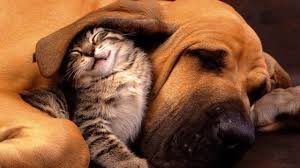 cute kittens and puppies together.  Cute Pictures Of Cute Puppies And Kittens Together Intended