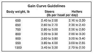 Steer Feeding Chart Steer Feeding Charts Related Keywords Suggestions Steer