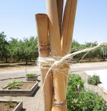 tie the top of the four poles tomato towers using bamboo