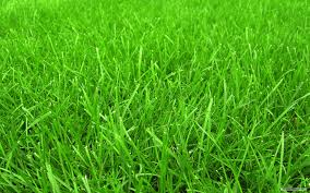 Grass Background Wallpaper - EnJpg