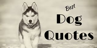 Dog Quotes Inspiration Dog Quotes 48 Funny Quotes About Dogs Puppies Cute Pictures