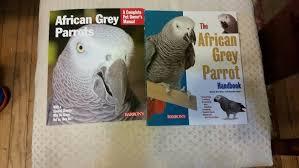 Guides More Birdladies Babies