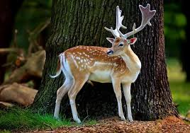 beautiful hd wallpapers of animals. Delighful Animals Beautiful Animals Wallpapers Throughout Hd Of