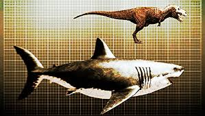 megalodon shark compared to t rex. Exellent Shark Megalodon Shark Vs T Rex In Size Inside Compared To A