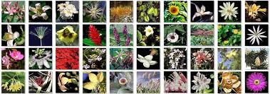 Bach Flower Remedies Chart Australian And Bach Flower Essences Newtons Pharmacy