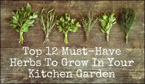 The Kitchen Garden 12 Must Have Herbs To Grow In Your Kitchen Garden