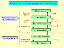Green Chart Dna The Following Flow Chart Depicts The Struture Of Dna