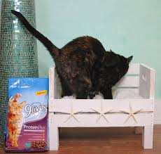 diy coastal cat bed via gina michele com