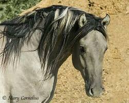 Pin by Sheree Sims on Horses | Horses, Wild horses mustangs, Wild horses