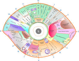 Left Eye Iridology Chart Iriscope Iridology Camera