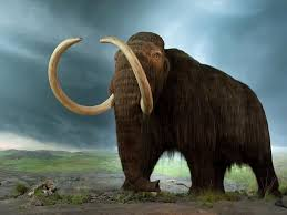 these are the extinct animals we can and should resurrect  biologist beth shapiro offers a guide to the science and ethics of using dna for de extinction