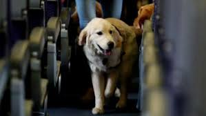 Emotional support animal real Vest Emotional Support Animals Posing Problems For Airlines Fox News Most Controversial Emotional Support Animal Stories Of 2018 Fox News