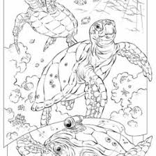 Small Picture Underwater Coloring Pages For Adults Archives Mente Beta Most
