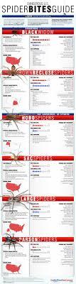 Spider Bites Guide Spider Bite Symptoms Treatment
