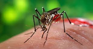 Image result for ZikaVirus