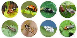 garden pest. Garden Pest E