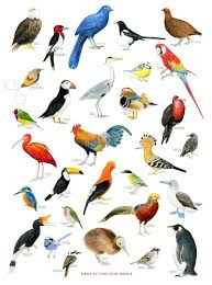 Magma Bird Chart Print By Christine Berries Bird Drawings