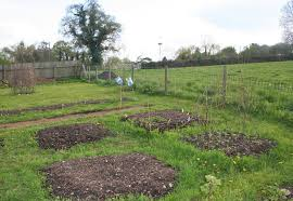 Small Picture Charming Inspiration How To Start A Vegetable Garden From Scratch