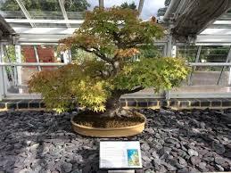 bonsai gardens. royal botanic gardens, kew: bonsai house gardens