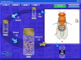 drosophila genetics lab introduction