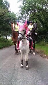 Horse for sale: Spike - Tetbury, Gloucestershire, UK