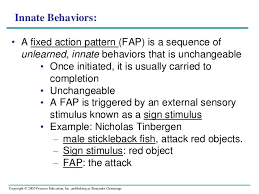 Fixed Action Pattern Example Fascinating Animal Behavior 48 48