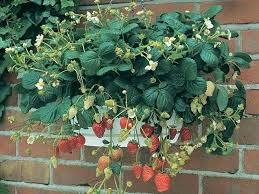 container garden plans. best container garden drainage holes gardening for strawberries plans tomatoes