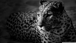 awesome jaguar pictures collection jaguar wallpapers