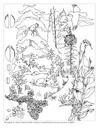 Coloring Pages Forest Animals Forest Habitat Drawing At Getdrawings Com Free For Personal Use