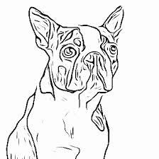 Small Picture Boston Terrier laurabigailcoloringpages