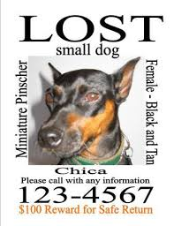 Lost Pet Flyer Maker missing dog sign template Socbizco 83