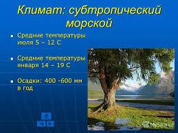 Презентация на тему Новая Зеландия Курсовая работа Учителя  7 Климат субтропический
