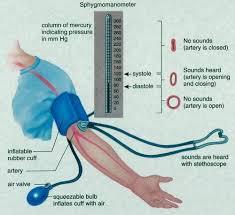 Blood Pressure Diagram Measurement Of Blood Pressure With A Sphygmomanometer 9 Download