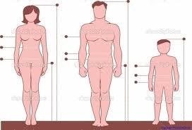 Human Proportions Chart Human Proportions Anatomy System Human Body Anatomy