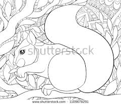 Squirrel Coloring Pages Popular Royalty Free Vectors Imagericcom