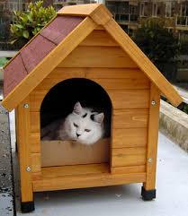 doghouse with cat. Cat in Dog House ...