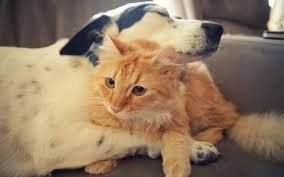 dog and cat love each other. Delighful Other Throughout Dog And Cat Love Each Other O