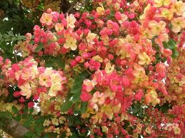 exotic flowers on kauai bring tourists back