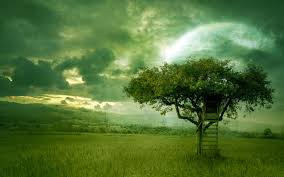 Image result for my tree my dream