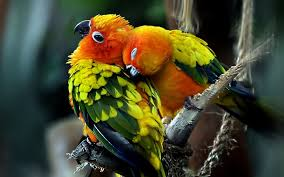 for most beautiful love birds wallpapers fb cover picture