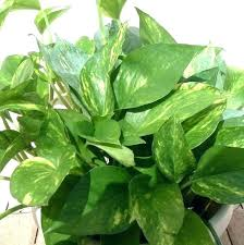 house plants pictures and names common indoor marvelous types of australia beaute common house plants names types of