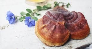 Medicinal Mushrooms Benefits 5 Stunning Reasons To Consume