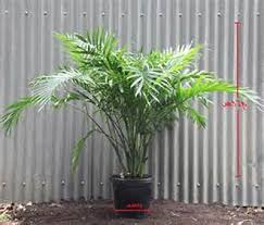 Small Picture Best Of Modern Bamboo Garden Design Ideas Asian Style Landscape