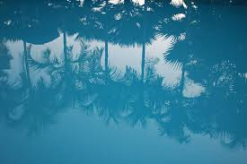 pool water wallpaper. Water Branch Sky Palm Tree Sunlight Wave Atmosphere Pool Reflection Tropical Blue Illustration Atmospheric Phenomenon Computer Wallpaper