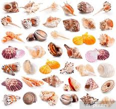 Wall Mural Vinyl Seashell Collection Isolated On A White
