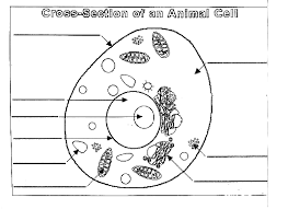 Animal Plant Cell Coloring Worksheet Cell Coloring Page Plant Cell