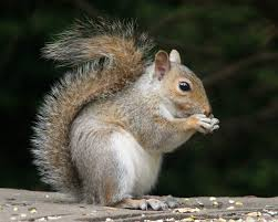 Image result for squirrel photos