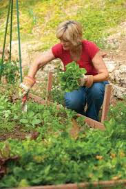 fall garden vegetables. a gardener prepares to plant for later harvest. istockphoto.com/michael deleon. peas. peas are great fall garden vegetable vegetables
