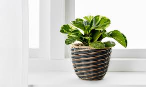 PISTAGENOT plant pot, 9cm, grey rattan